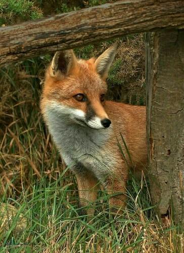 عکس های پروفایل حیوانات بامزه شیک