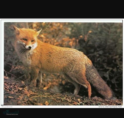 عکس های پروفایل حیوانات فانتزی جدید