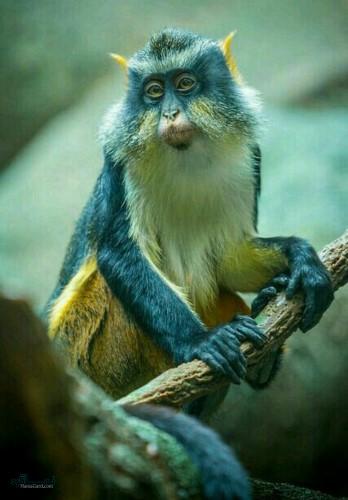 عکس های پروفایل جانوران زیبا