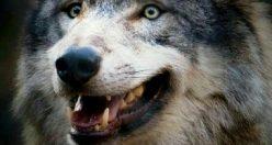 عکس پروفایل جانوری + عکس های جذاب ناب حیوانات ۱۴۰۰