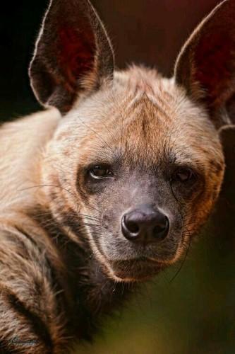 عکس های پروفایل حیوانات زیبا