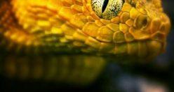 عکس پروفایل حیوانات وحشی + عکس های جذاب ناب حیوانات (۵)