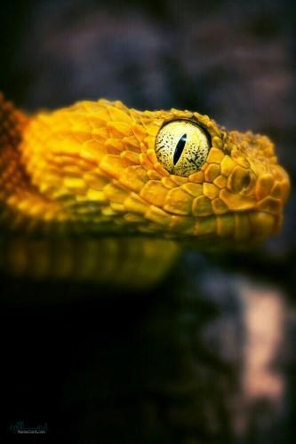 عکس های پروفایل حیوانات وحشی شیک