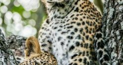 عکس پروفایل حیوانات با نوشته + عکس های جذاب ناب حیوانات (۶)