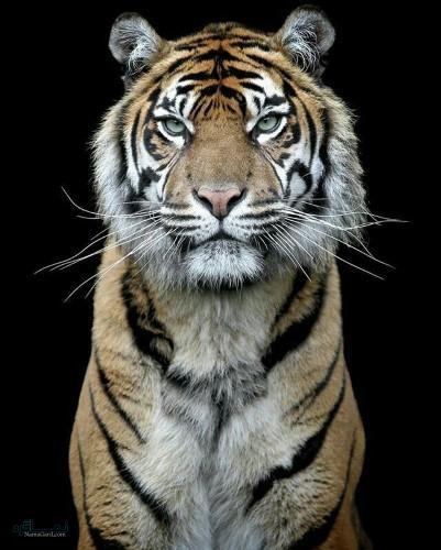 عکس های پروفایل حیوانات متفاوت