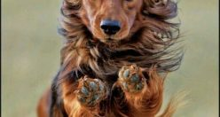 عکس پروفایل حیوانات فانتزی + عکس های جذاب ناب حیوانات (۴)