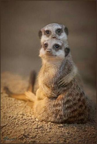 عکس های پروفایل حیوانات ناز قشنگ