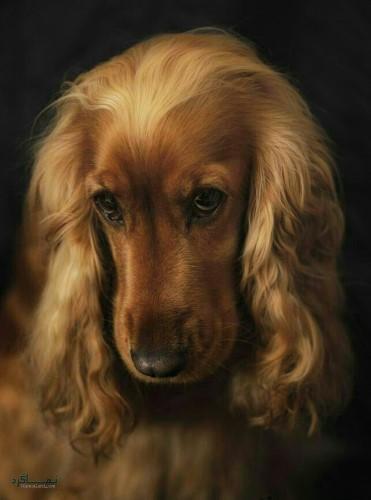 عکس پروفایل حیوانات زیبا