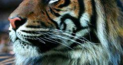 عکس پروفایل حیوانات + عکس های جذاب ناب حیوانات (۳)
