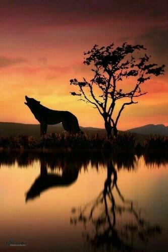 عکس پروفایل حیوانات وحشی