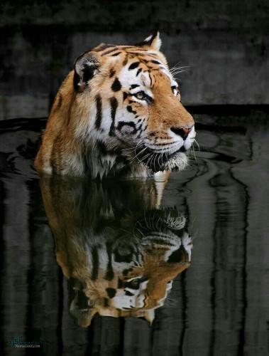 عکس پروفایل حیوانات با متن