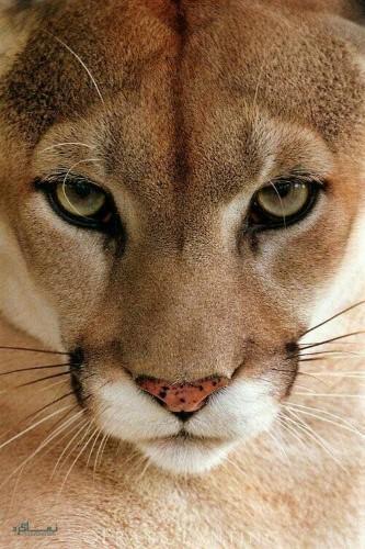 عکس پروفایل حیوانات بامزه