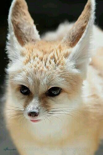 عکس پروفایل حیوانات