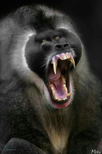 عکس پروفایل حیوانات با نوشته