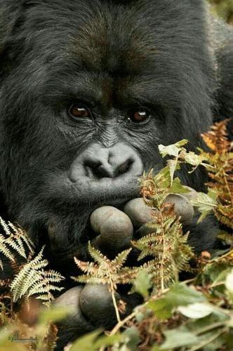 عکس پروفایل جانوران