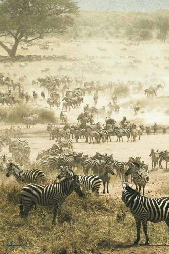تصویرهای زمینه حیوانات برای گوشی ناب