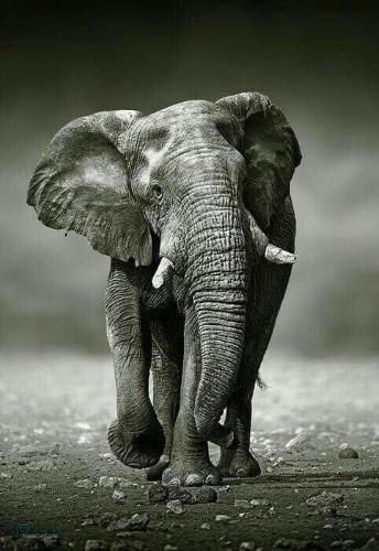 تصویر های زمینه حیوانات جدید