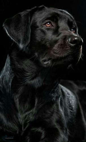 تصویر های زمینه حیوانات وحشی جدید