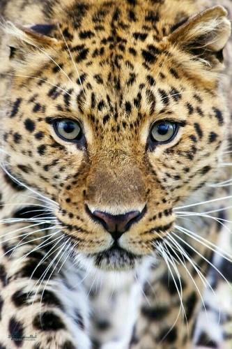 تصاویر زمینه حیوانات جدید