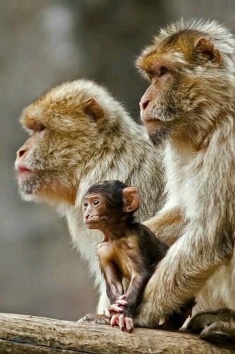 تصویر های زمینه حیوانات خاص