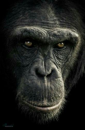 تصویرهای زمینه حیوانات برای کامپیوتر شیک
