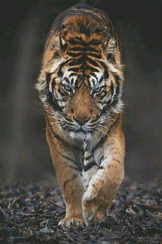 تصویر های زمینه حیوانات وحشی ناب