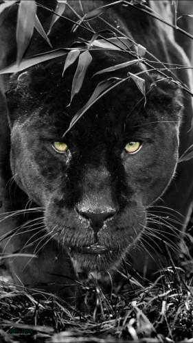 تصویرهای زمینه حیوانات وحشی جذاب