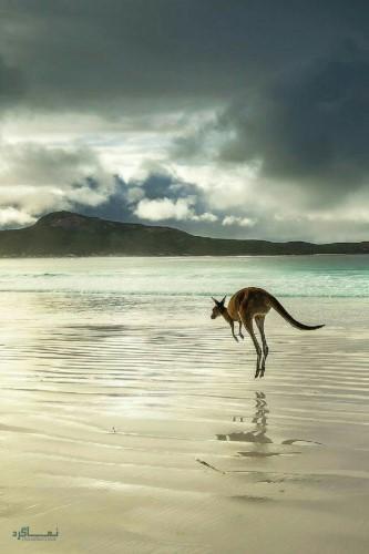تصویرهای زمینه حیوانات برای گوشی جدید