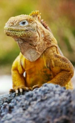 تصویرهای زمینه حیوانات وحشی ناب