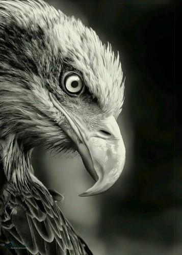 تصویر های زمینه حیوانات زیبا