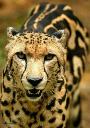 تصویر های زمینه حیوانات بامزه جذاب