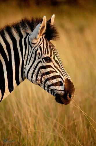 تصویر های زمینه حیوانات وحشی شیک