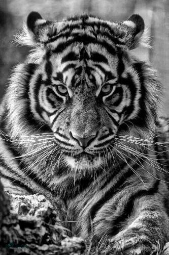 تصاویر زمینه حیوانات جذاب