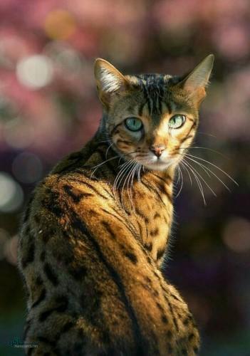 تصویر های زمینه حیوانات شیک