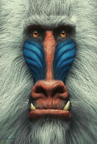 تصویرهای زمینه حیوانات برای گوشی قشنگ