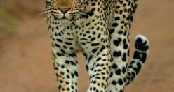 تصویر زمینه حیوانات ناز + عکس های حیوانات جذاب ۱۴۰۰