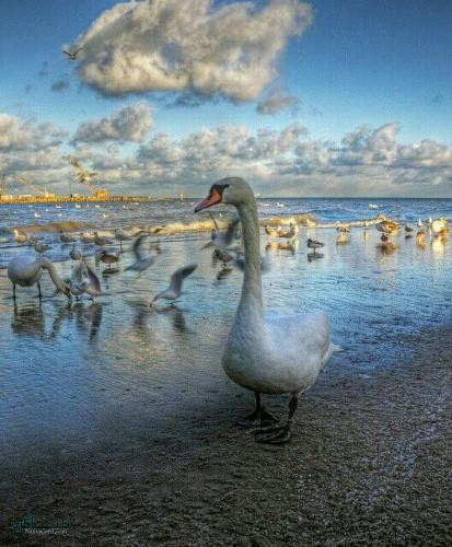 تصویر های زمینه حیوانات جذاب