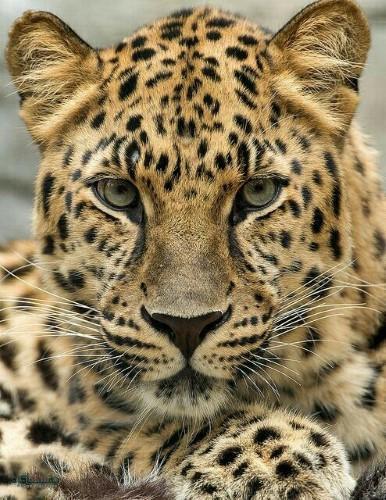 تصویرهای زمینه حیوانات وحشی جدید