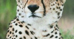 تصویر زمینه حیوانات وحشی + عکس های حیوانات جذاب (۱۰)