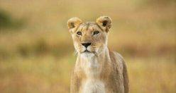 تصویر زمینه حیوانات زیبا + عکس های حیوانات جذاب (۳)