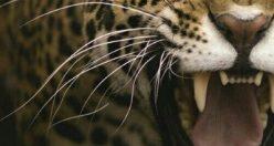 تصویر زمینه حیوانات اچ دی + عکس های حیوانات جذاب (۵)