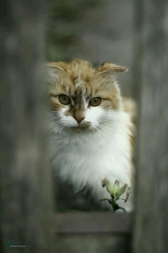 تصویر های زمینه حیوانات بامزه جدید