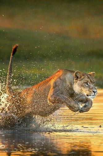 تصویر های زمینه حیوانات وحشی زیبا