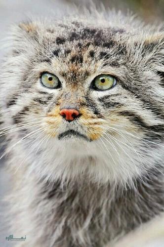 تصویرهای زمینه حیوانات برای گوشی جذاب