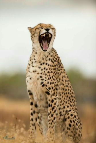 تصویر های زمینه حیوانات بامزه خاص