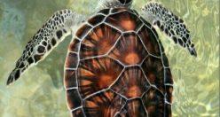 تصویر زمینه حیوانات + عکس های حیوانات جذاب پس زمینه (۷)