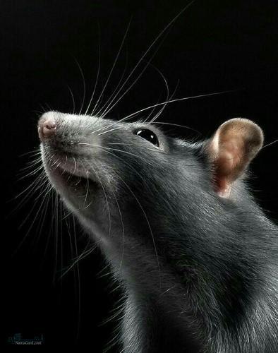 تصویرهای زمینه حیوانات برای گوشی خاص