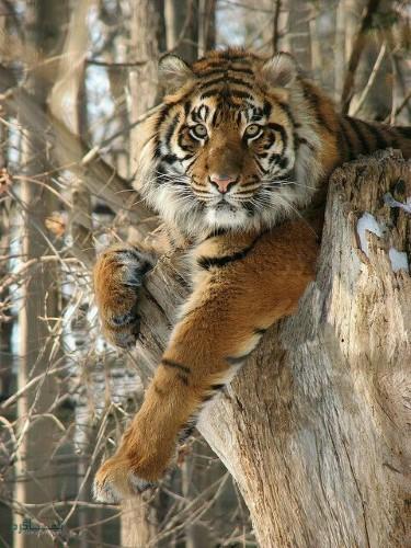 تصویر های زمینه حیوانات وحشی متفاوت