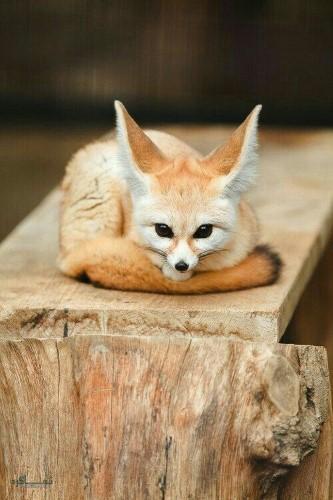 تصویرهای زمینه حیوانات وحشی خاص