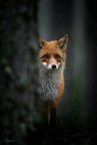 تصویر های زمینه حیوانات قشنگ